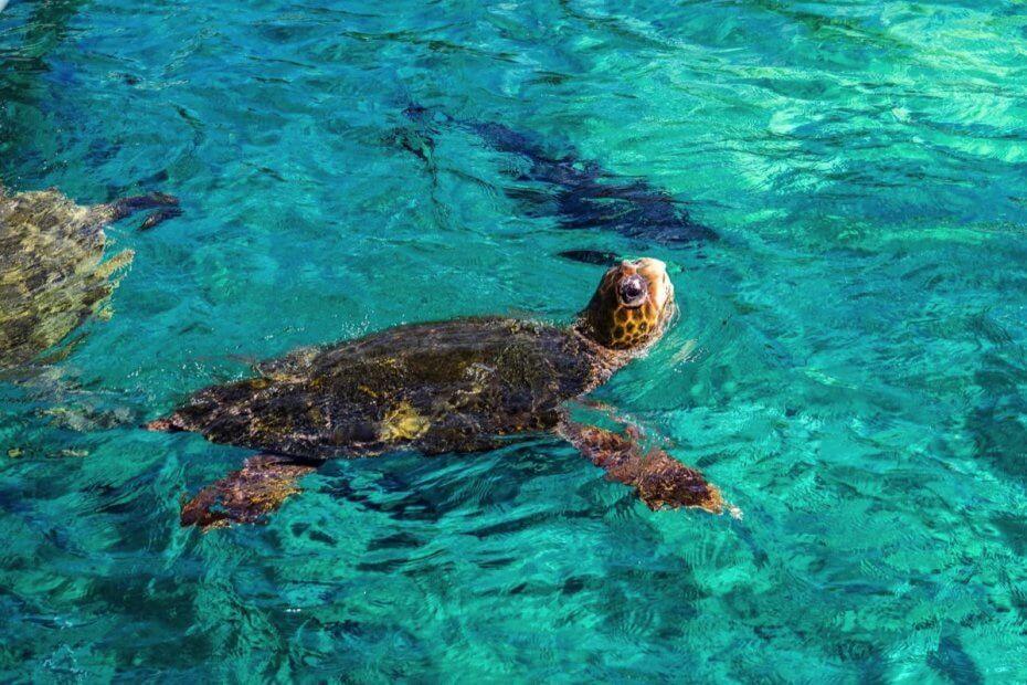 Schilpad spotten op Curacao